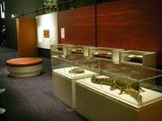 Naidoc Exhibition