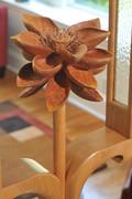 Lotus in bloom