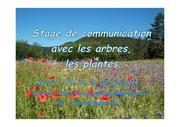 Stage de communication avec les arbres, les plantes