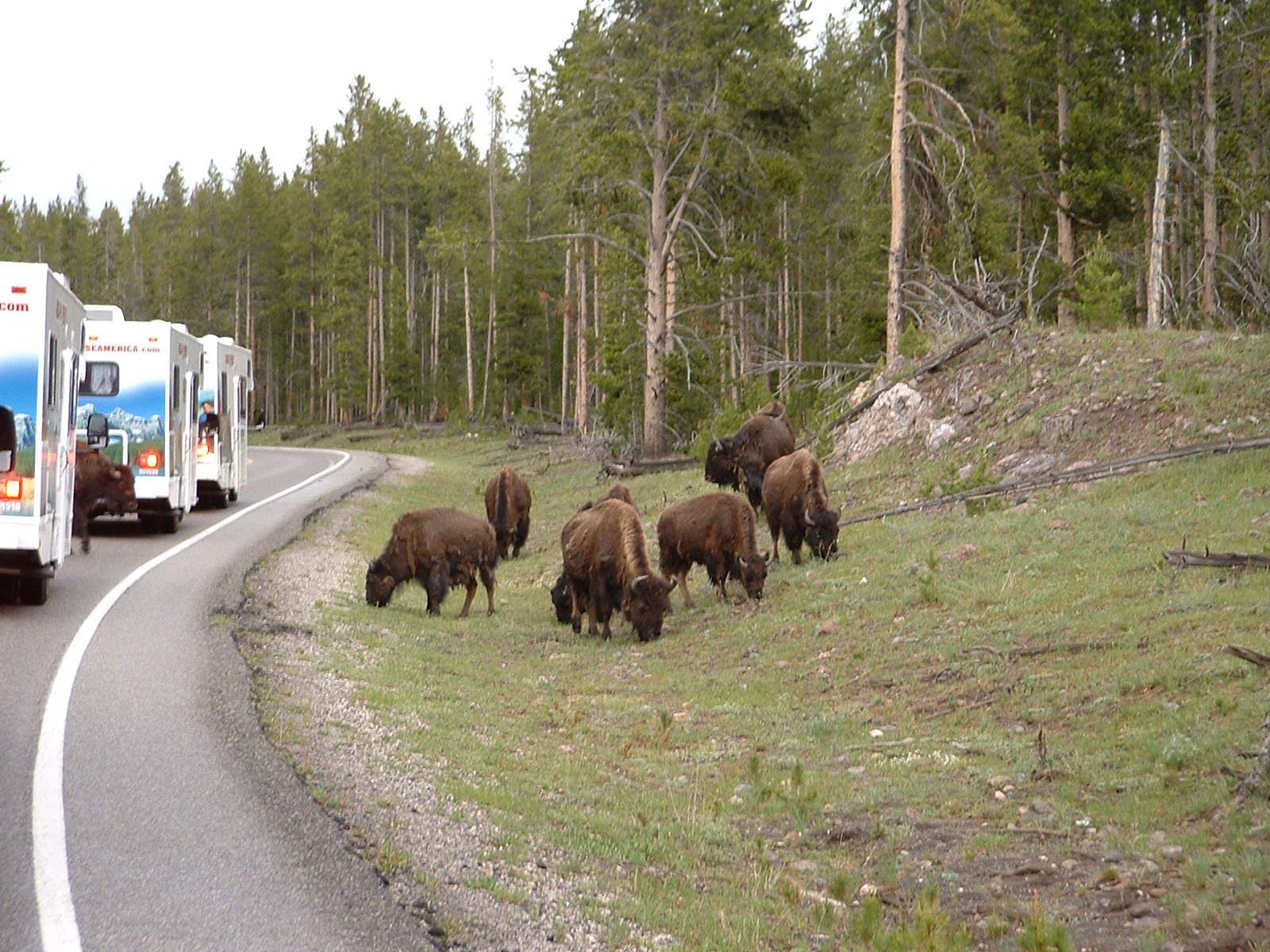 Cruise RV's with Bison