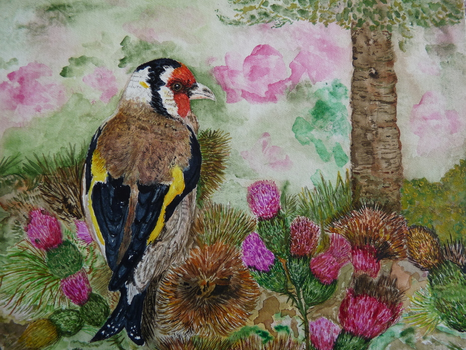 Gold finch on thistle