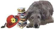 Irish Wolfhounds Rule!