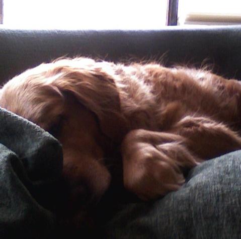 bella sleeping
