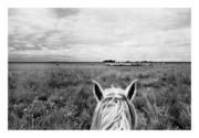 Llano Adentro ©Christian Belpaire