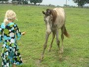 pony mare7-08 011