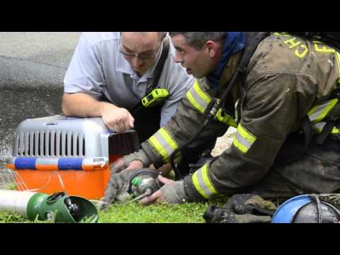 Two cats rescued in east Charlotte house fire