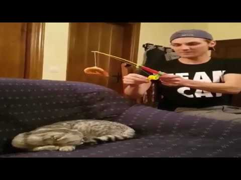 The funniest and most hilarious ANIMAL and BIRDS videos #1 - Funny animal and BIRDs compilation