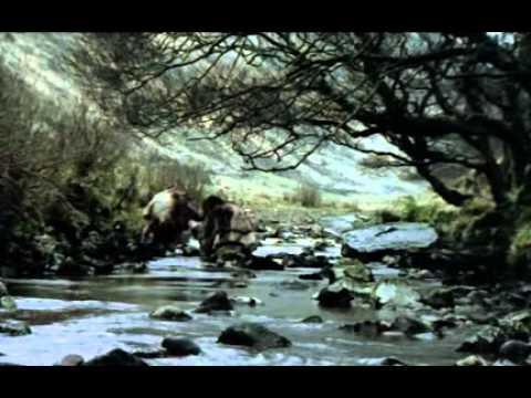 1 - El hombre de Neandertal
