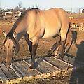 A few of my horses