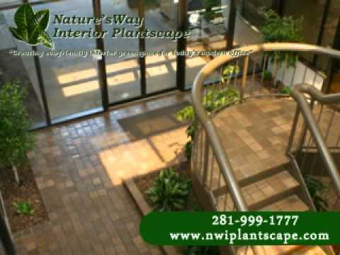 Natures Way Interior Plantscape