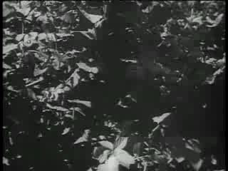 World War II - German Sniper Training Film 1:08:21 - 3 years ago An excellent example of the propaganda-laden training films of the Nazi military.
