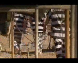 Prison 50:07 - 2 years ago A British documentary exposes life in American prisons...