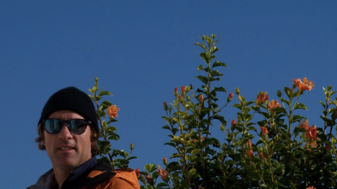 Juca Morais: Wild javali