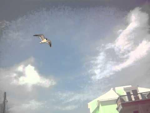 Seaguls and Cheetos