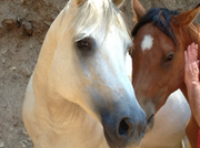 Dynamic Trust - Equine Workshop