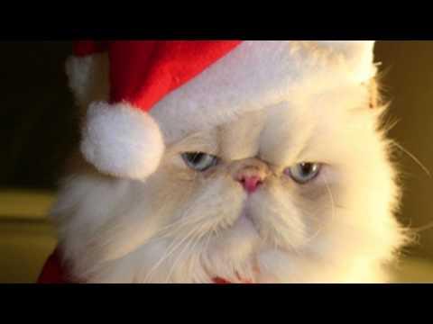 Christmas Catz - A Christmas Song