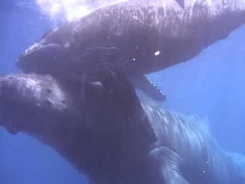 Rencontre avec les Baleines 2