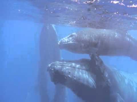 Rencontre avec les Baleines