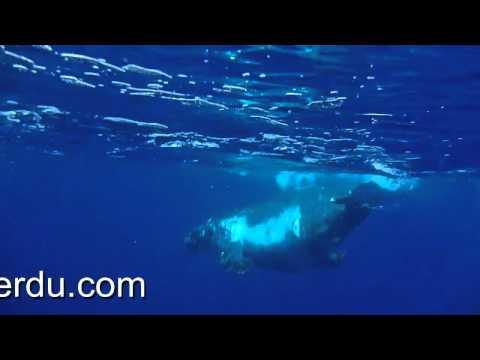 La famille Baleine que pour nous...