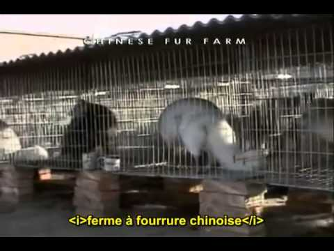 Avertissement âmes sensibles: Terriens/ Earthlings vostfr MIRROR