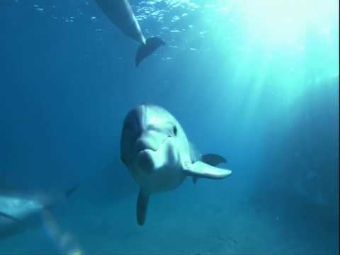 Dolphins ~ Meditation Music