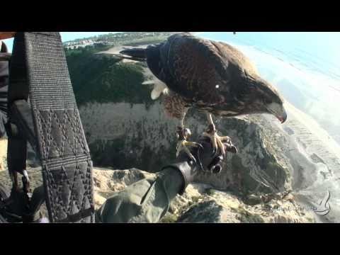 Rio for Real! Fly with a bird . voler avec lui !
