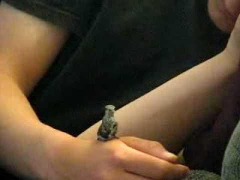 Un garçon recueil un bébé colibris après qu'il ai été attaqué