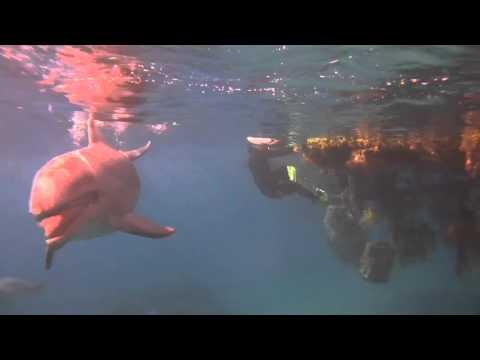 Bols chantants et dauphins