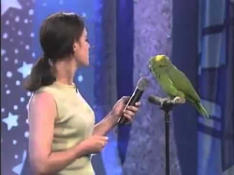 Parrot Singing Song
