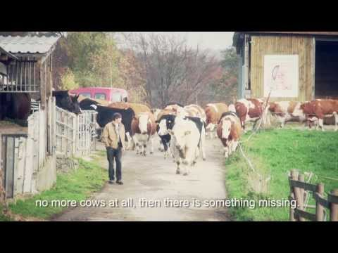 """Happy Cows"" second part / gerettete Kühe 2.Teil / saved Cows with engl. subtitles"