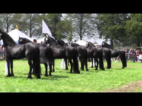The KFPS Royal Friesian Horse