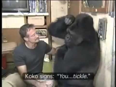 Robin Williams, Koko un jeu de chatouilles - Giulio Fioravanti - Magnétisme Épigénétique