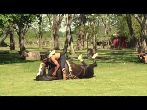 Magnifique dressage d'un cheval avec seulement de la douceur et de l'Amour