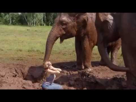 Quand les elephants nous enseignent le rituel de la terre