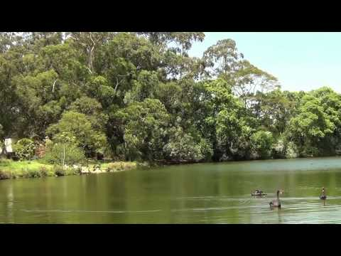 Chant des Oiseaux - 2 Heures -  Se Détendre Et Dormir