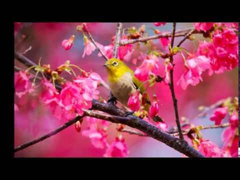 Frederic Chopin - Romance