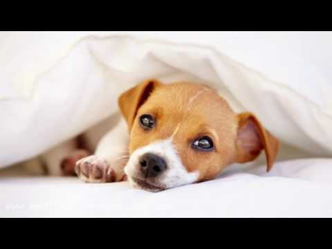 3 HOURS Calming Relaxing Music for Dogs, Help with Separation Anxiety and Stop Barking