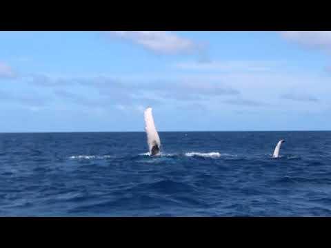 Vivez une expérience vibratoire UNIQUE avec un petit baleineau