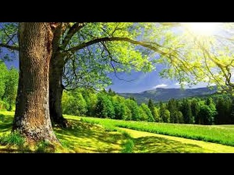 Méditation de la nature : Trees  | أشجار | Arbres