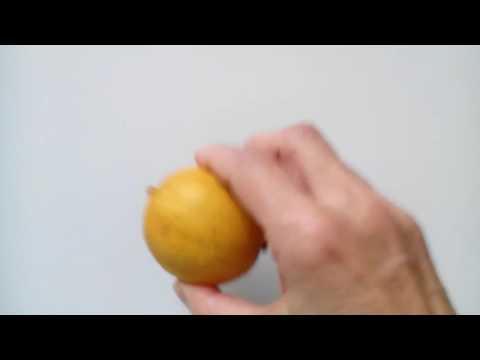 Citron magnétisé sur une quinzaine de jours