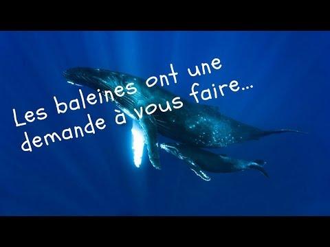Les baleines ont une demande à vous faire ...