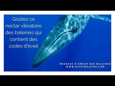 Goûtez au nectar vibratoire des baleines qui contient des codes d'éveil