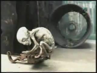 Strange Creature captured in Metepec
