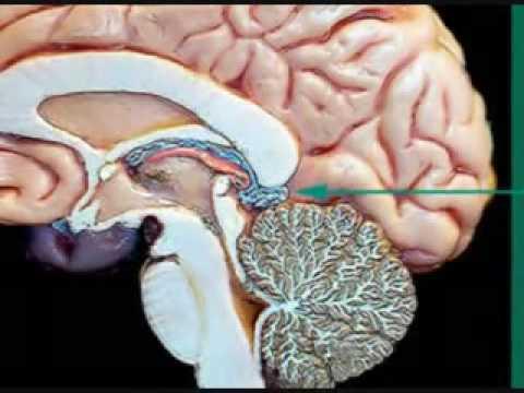 pineal gland awareness + awakening third eye