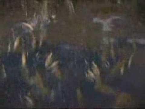 Glitches on The Matrix - It's raining fish.