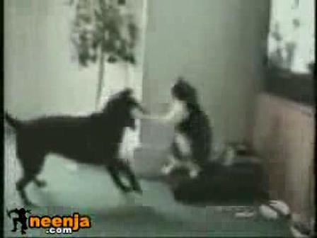 Animal Evolution; cat boxing dog