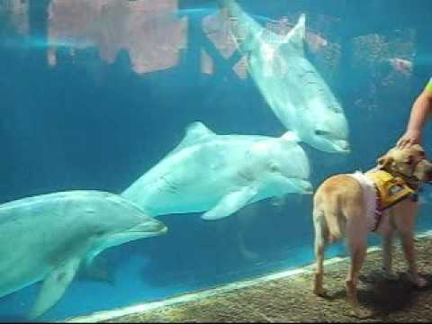 Dolphins and Dogs