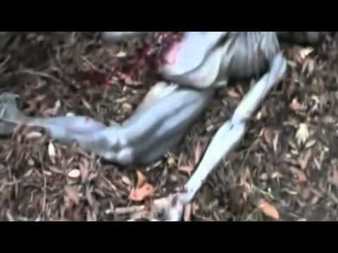 Unpleasant UFO Occupant UPDATE APRIL 2011- REAL GREY ALIEN HYBRID FOUND DEAD MADONIE SICILY? PART 4