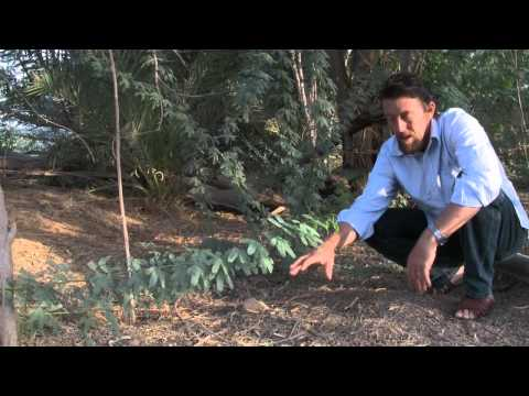 Permaculture - Greening the Desert Final (2009).mp4