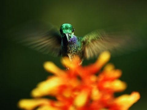 Louie Schwartzberg: The hidden beauty of pollination